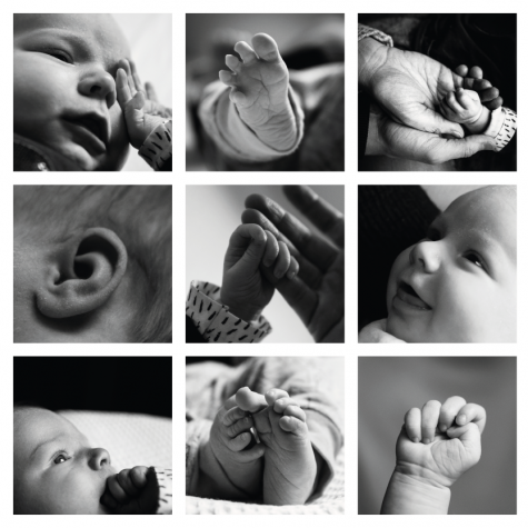 Collage newborn shoot